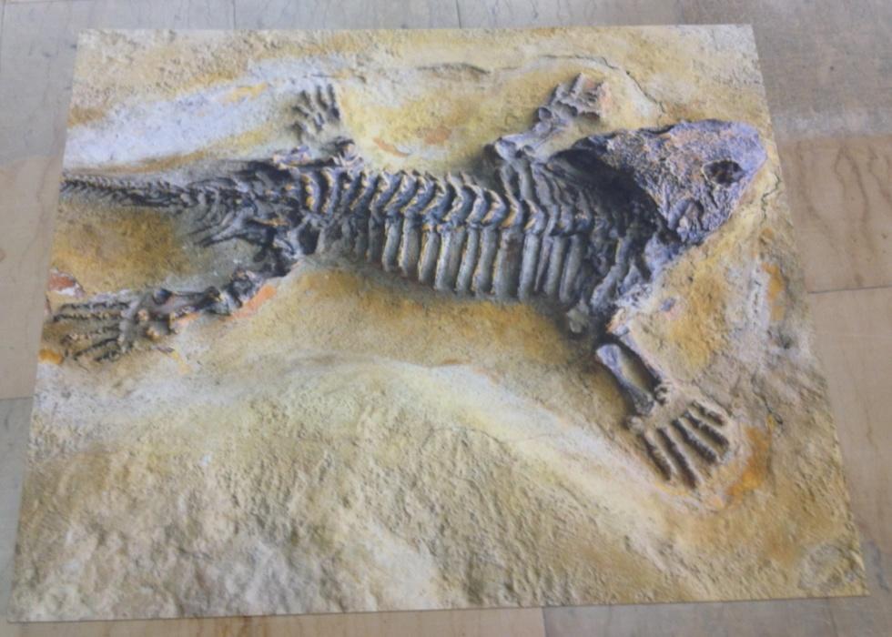 Bodenschutzmatte Fossil