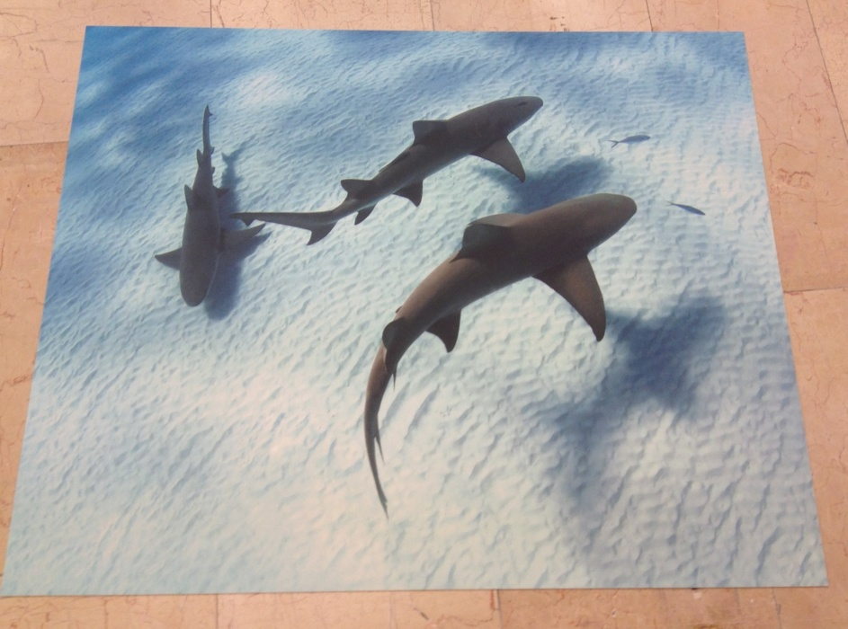 Bodenschutzmatte Haie