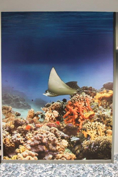 Fototapete Aquarium Fotoboden