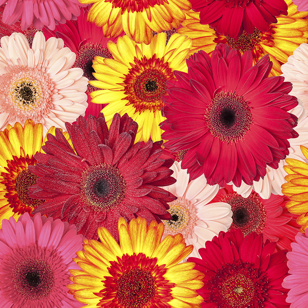 Vinylboden Blumen