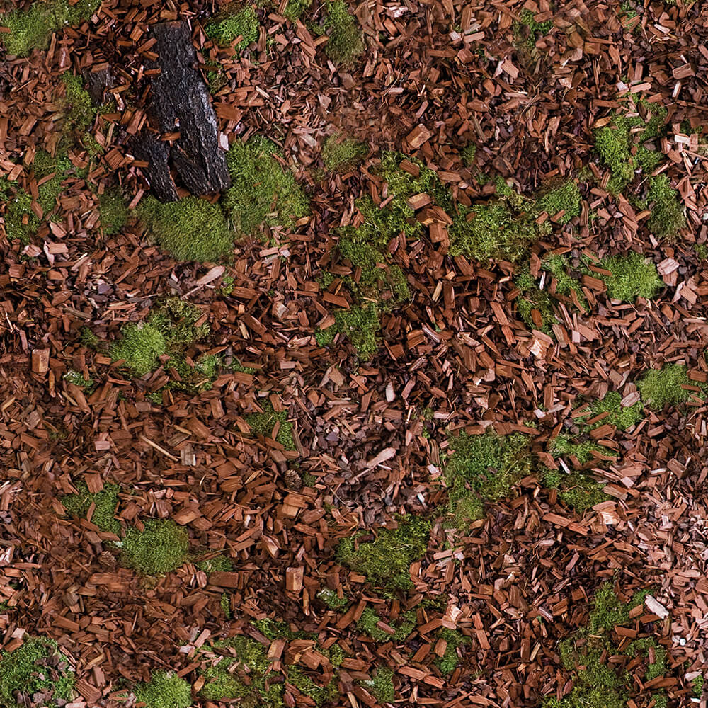 Waldboden – Motivnummer: 9109