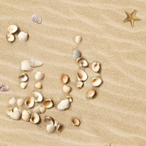 Designboden Bodenbelag Sand mit Muscheln Motiv