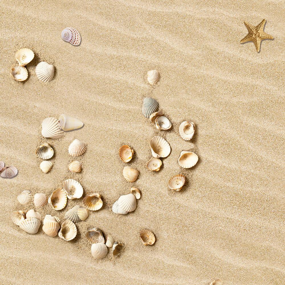 Sand mit Muscheln Motiv