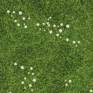 Vinylboden Wiese mit Gänseblümchen Fotoboden