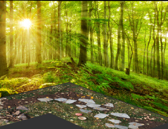 Individuell bedruckter Vinylboden - FOTOBODEN™ - Waldboden fotorealistisch gedruckt mit FOTOTAPETE, Blick in den Wald, passend zum Boden.
